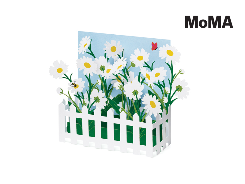 PICKET FENCE DAISIES